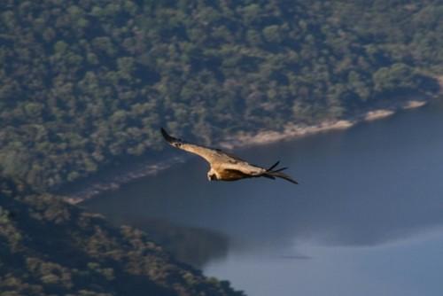 Birdwatching in Extremadura (Spagna)