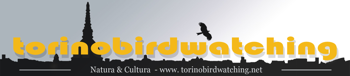 Torino Birdwatching Official Site – EBN Italia