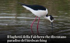 Gli Uccelli della Falchera su La Repubblica